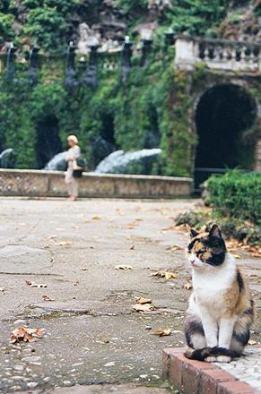 gato_parque
