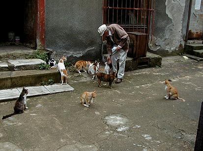 gatos_calle