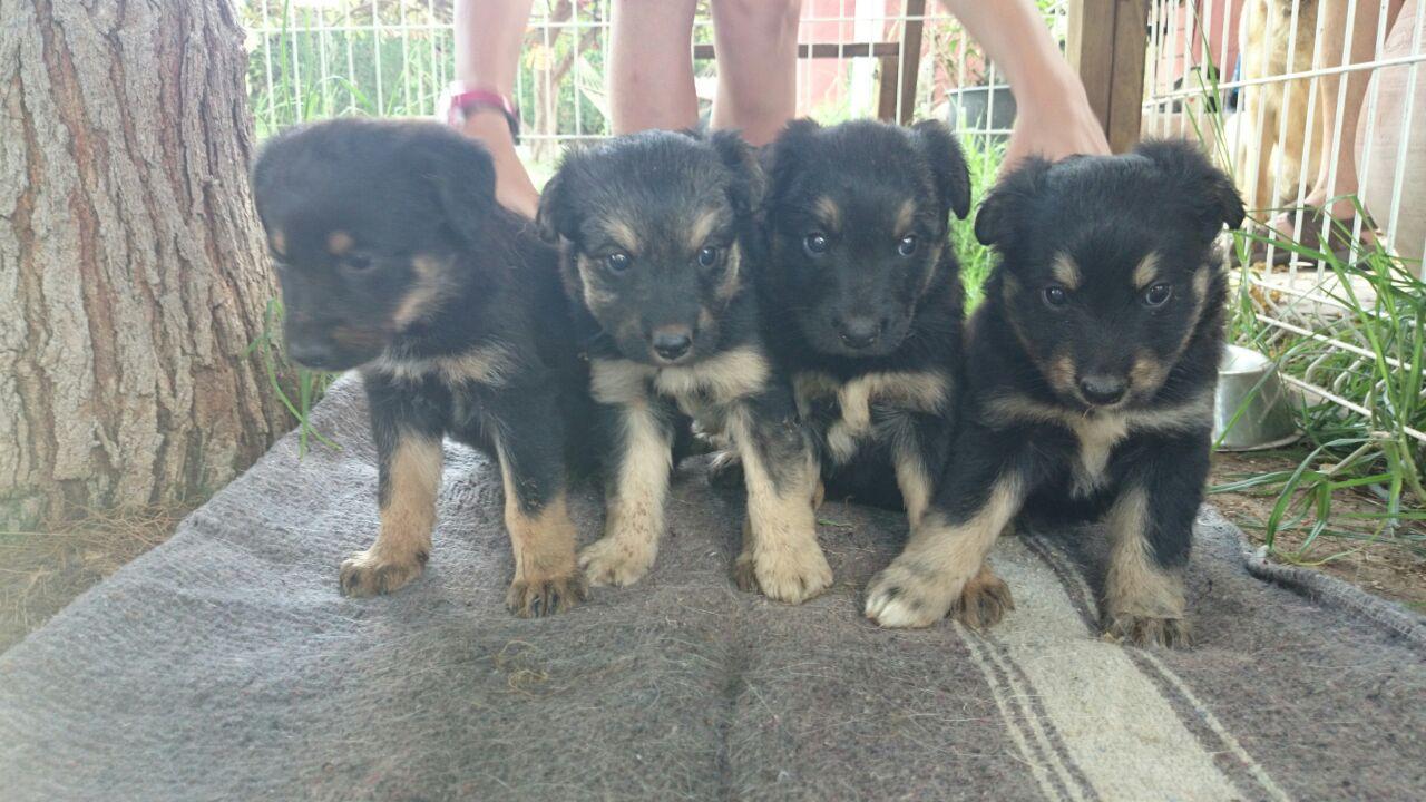perros_en_adopcin