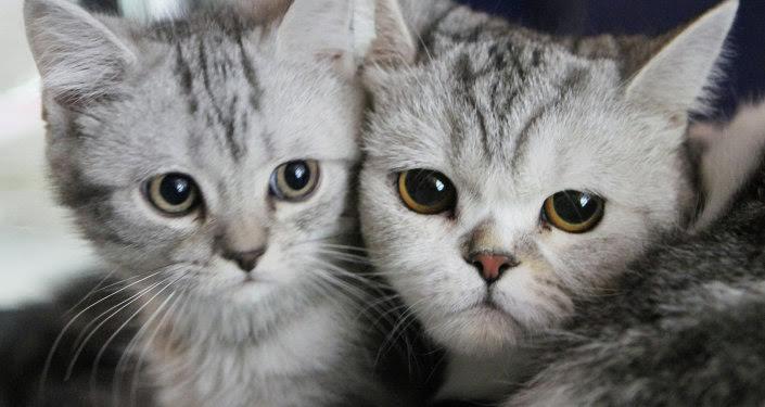 foto_gatos