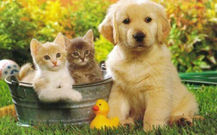 perros_y_gatos
